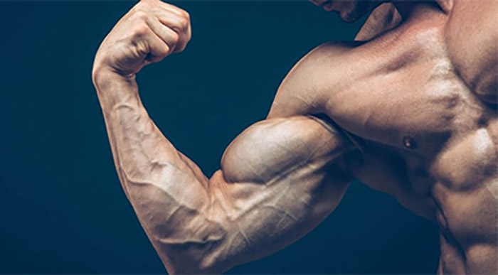 best biceps exercises for muscle building